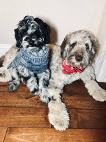 Luna and Willie