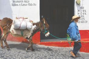 man and buro       Taxco, Mexico