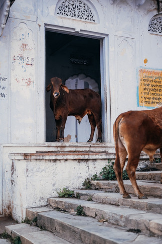 Indie, Pushkar