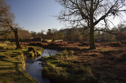 Picture from Bradgate Park near Leiceste