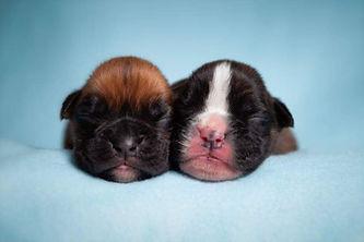 puppy4.jpeg