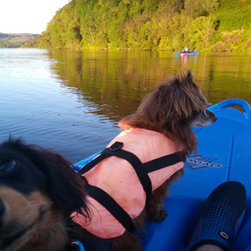 CANOEING WITH THE DOGS