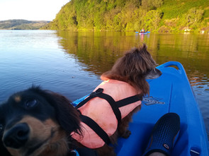 DOGS ON THE CANOE