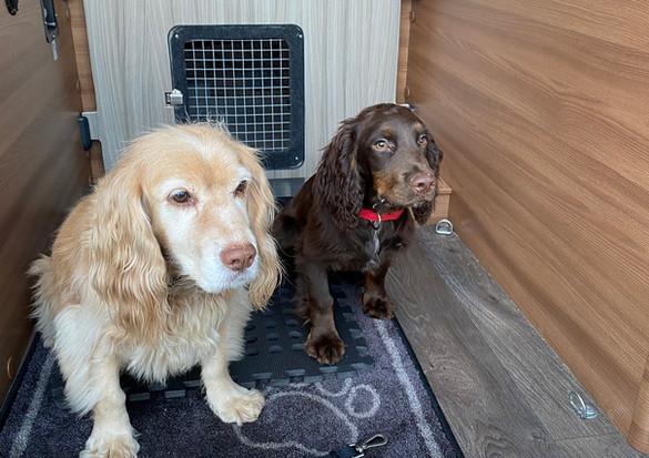 BESPOKE DOG PEN INCLUDED IN CAMPER CONVERSION