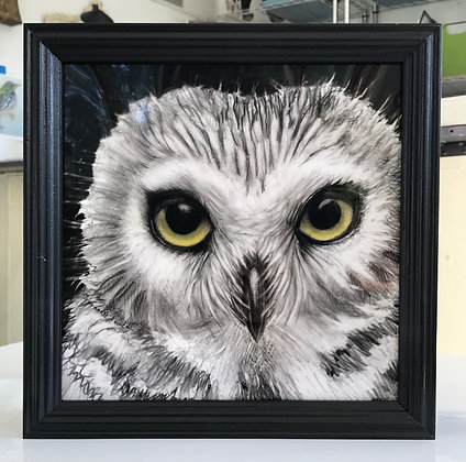 Owl Pacino