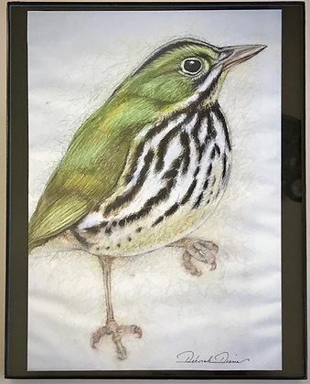 Oven Bird Print