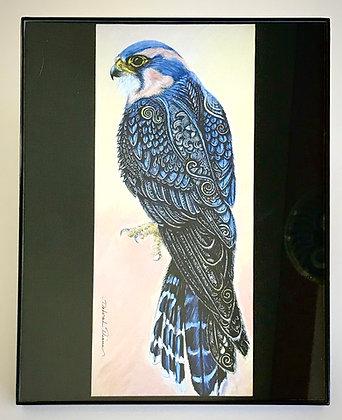 Aplomado Falcon Print