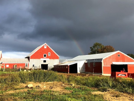 ScrapDogs receives a grant from Maine DEP - with Bò Lait Dairy Farm!