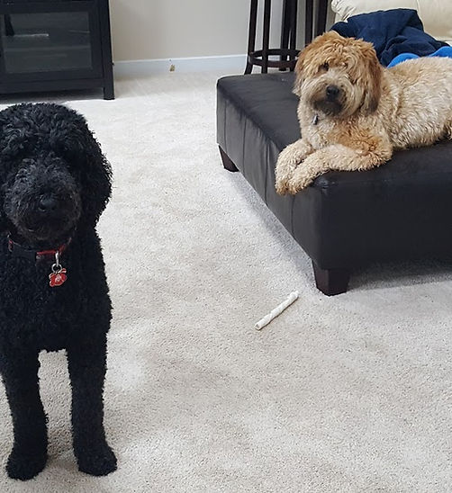 two dogs who love when DogDays stays with them while their owners are on vacation