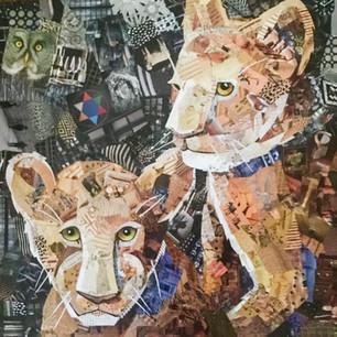lion cubs commission 2017
