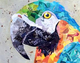 macaw 2016