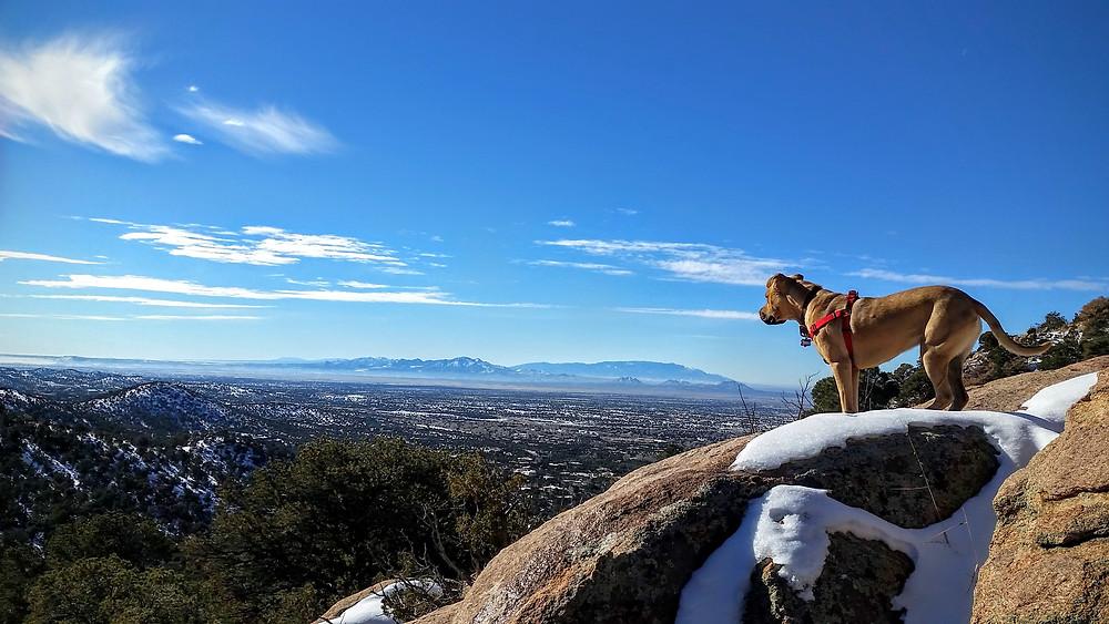 Roxie on Sun Mountain