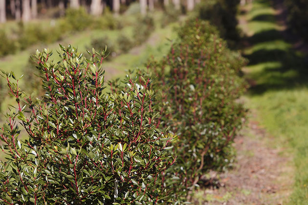 EOT TNP bush_109.jpg
