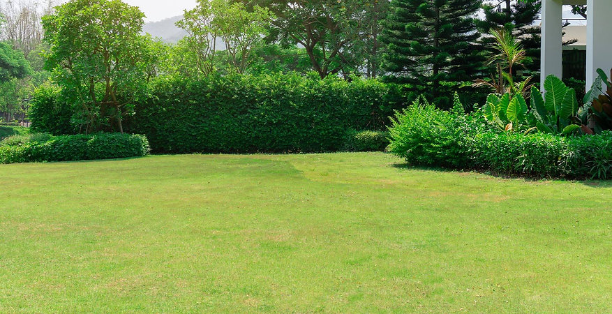 shrubs_banner.jpg