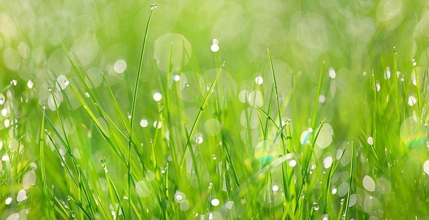 grass_banner.jpg