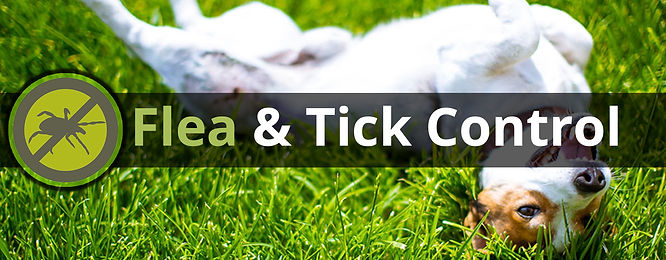 Flea and tick 2.jpg