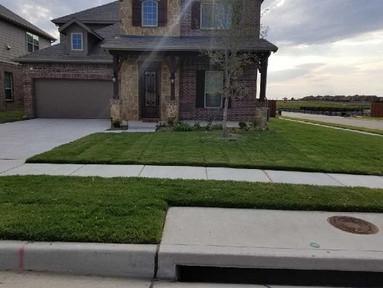 Weed Control in McKinney, TX.jpg
