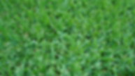 St Augustine Grass.PNG