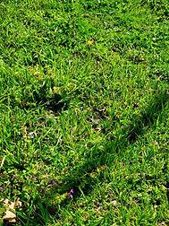 weed control .JPG