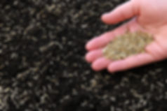 Fescue Seeding