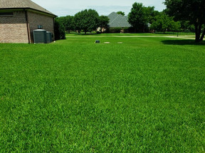 Weed Control in Plano Texas