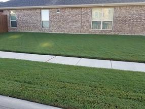 Weed Control in Allen Texas