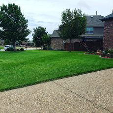 Weed Control In McKinney Texas