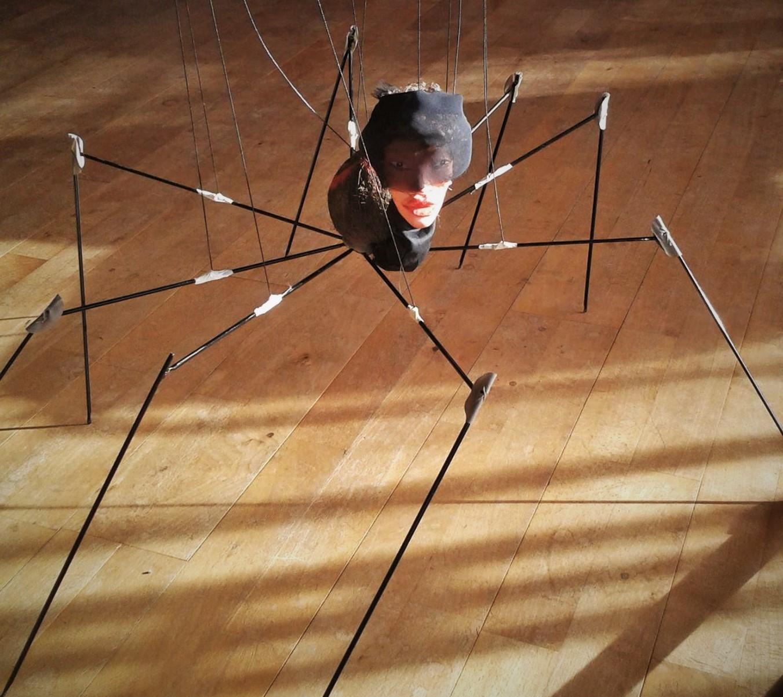 die Spinne, eine Witwe
