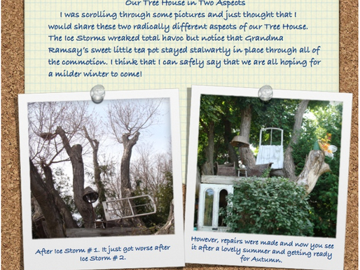 A Tree House in Two Aspects! September 13, 2014