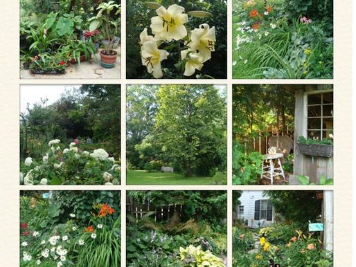 High Summer in the Garden! July 14, 2014