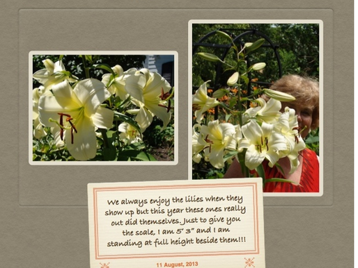 Photos from the Summer Garden! August 12, 2013