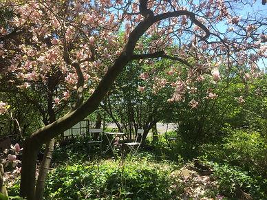 Magnificent Magnolia .JPG