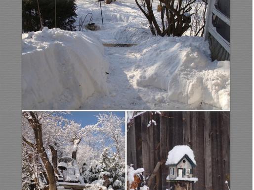 Winter Wonderland, NOT! February 7, 2014