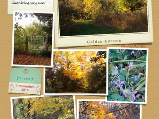 Golden Autumn November 6, 2014