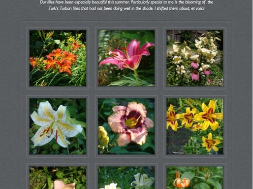 Summer Beauty in the Garden August 21, 2015