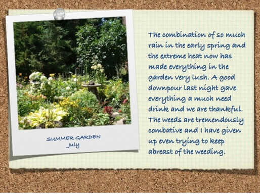 Update from the Garden July 31, 2013