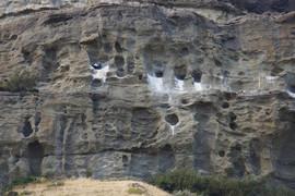 Condors in Chile