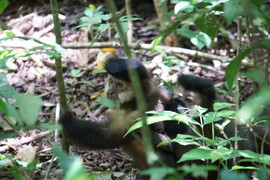 Baby Monkey in Brazil
