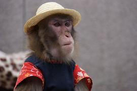 Monkey in Tokyo