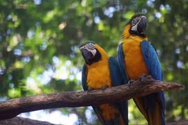 Macaw's in Brazil Zoo