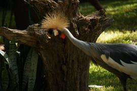 Bird in Brazil Zoo