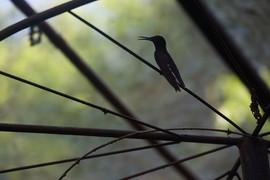 Hummingbird in Brazil Zoo