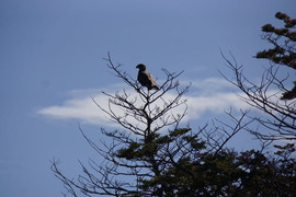 Predator bird in Patagonia