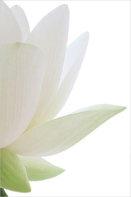La méditation du lotus