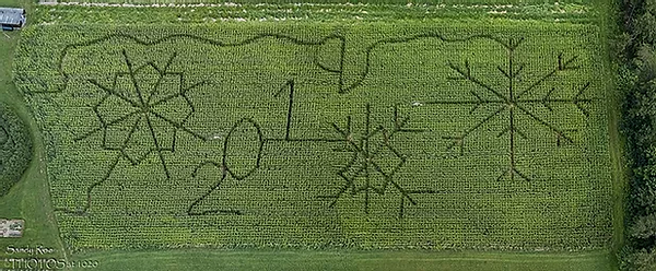 corn maze 2019.webp