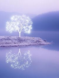 arbre-lumiere-10.jpg