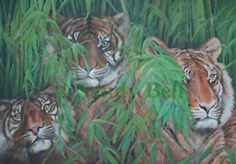 Tigers small marked .jpg