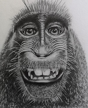 Scott Graphite.jpg