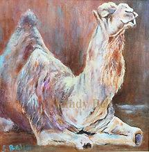 Camel 1 small marked.jpg