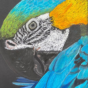 Carter - Blue and Gold Macaw.jpg
